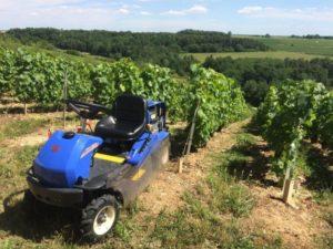 Débroussailleuse autoportée vigne, Petit Collin, Queudes, Sézanne, Marne, 51